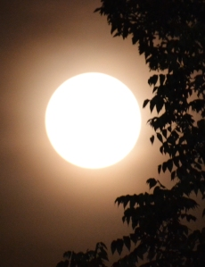 moon-super-1